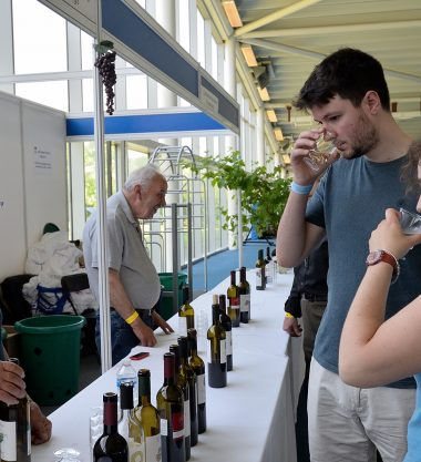 Cypriot Wine Festival & Business Expo